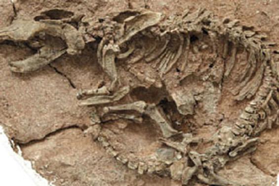 300 milyon yıllık dinozor iskeleti bulundu