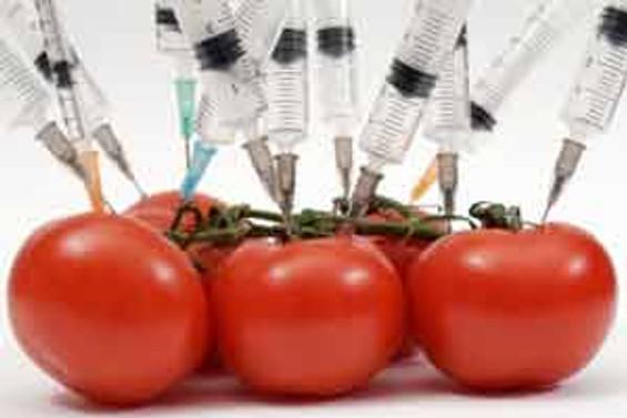 GDO'lu tohum izni için Türk yetkililerle görüşüyoruz