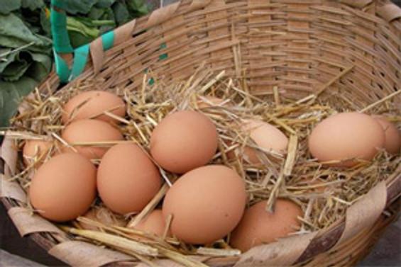 ABD'de yumurtalar toplatılıyor