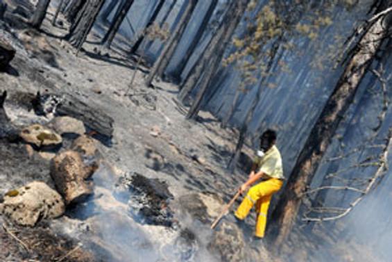 Milas'ta orman yanıyor