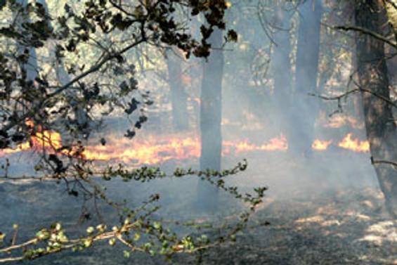 Kızılcahamam'da 6 hektar kül oldu