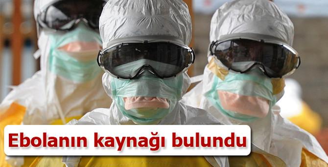 Ebolanın kaynağı bulundu