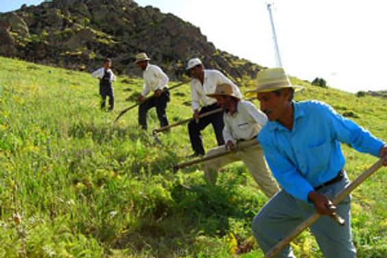 Çiftçiye 3,1 milyar lira kredi