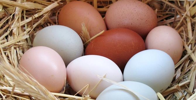 Köy yumurtasına yeni standartlar getirildi
