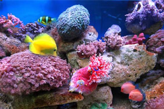 Denizlerde 250 bin tür var
