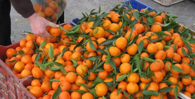 29 ton mandalina Türkiye'ye geri gönderildi