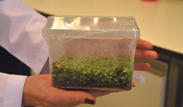 Bitki büyümesini teşvik eden bakteri bulundu