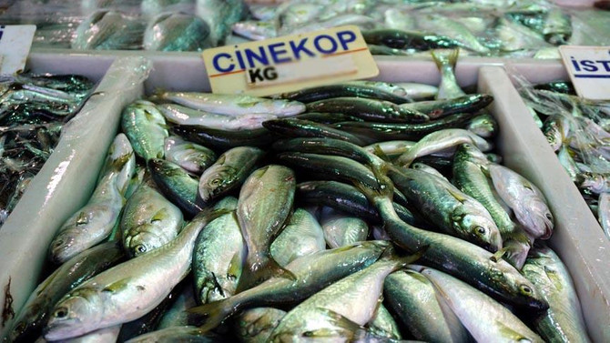Balıkçıların yüzü çinekopla gülüyor