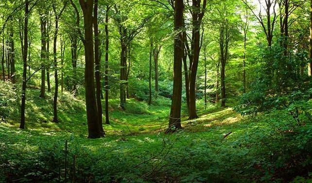 Yılda 25 milyon ağaç kesilmekten kurtuluyor