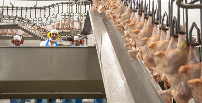 Tavukçuluk sektörü sıkıntıda