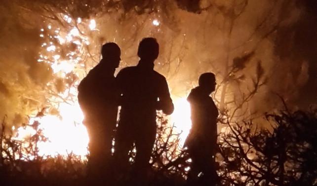 Bolu'daki orman yangını kontrol altına alındı
