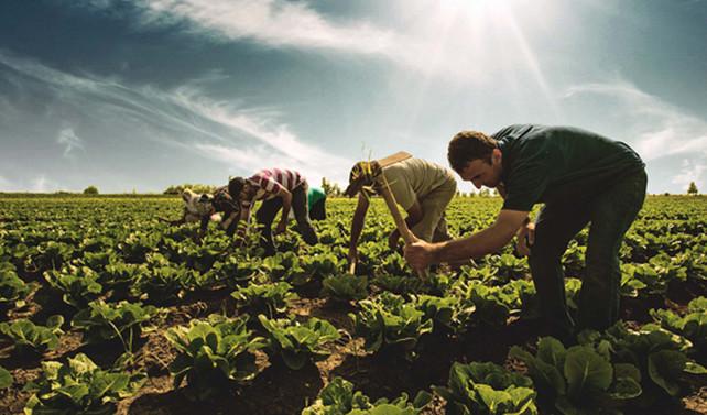 Çiftçilere 600 milyon liralık destek geliyor