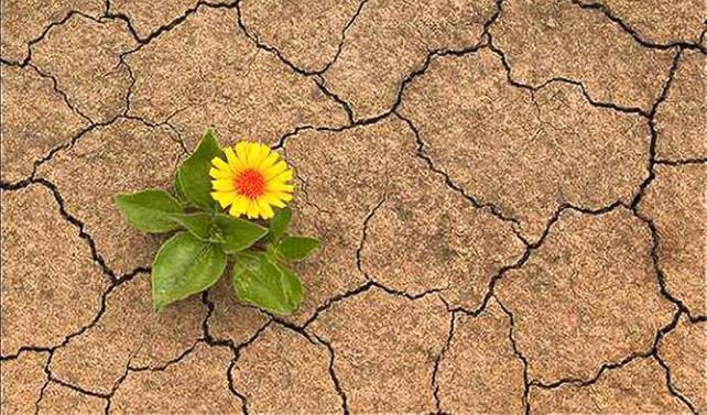 Doğanın yok oluşunu tersine çevirecek 5 öneri