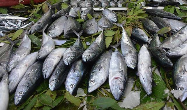 Balık stoğunun üçte biri tükendi