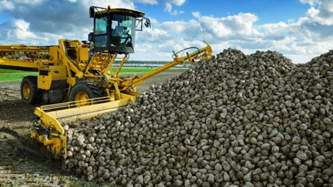 Türkşeker, 300 bin ton şeker satacak