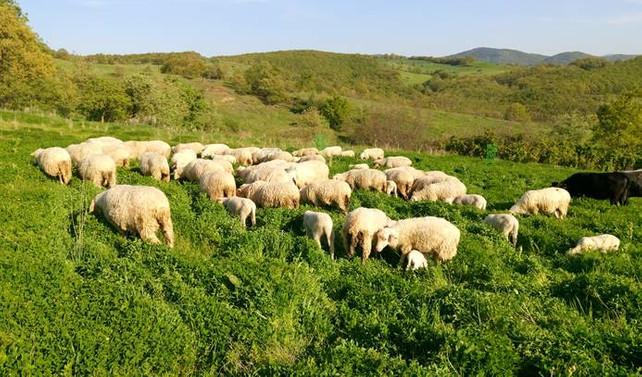 Mera hayvancılığı ile toprağın kalitesi arttı
