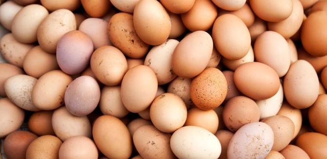 Yumurta fiyatlarındaki artış 'geçici'