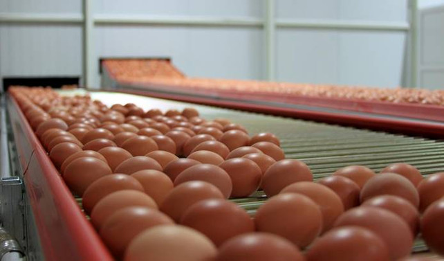 Yumurta üreticilerinden KDV indirimi talebi