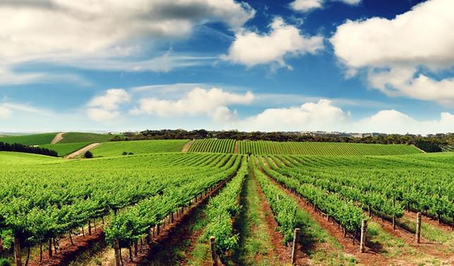 Tarımda 'korumacı politika' değişiyor
