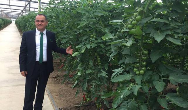 Yüksel Tohum, tescilli hibrit sebze tohumu ihraç ediyor
