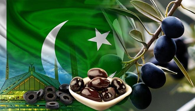 Pakistanlı gıda toptancısından zeytin talebi