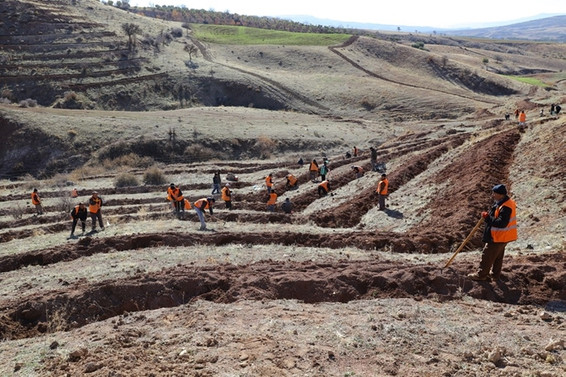 Gaziantep'te 1 milyon metre kare alan ağaçlandırılacak