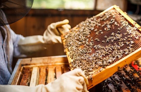 Arı yetiştiricileri soğuktan memnun