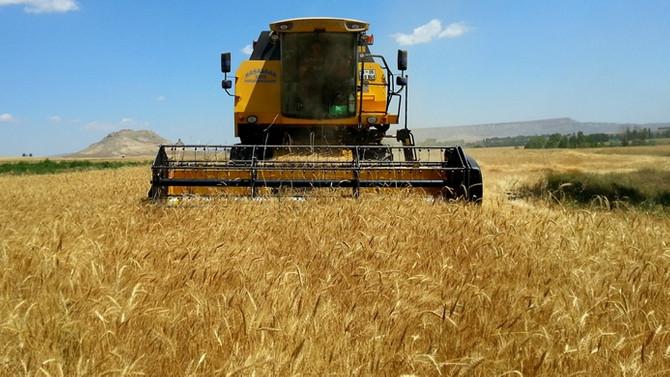 Türkiye 90 bin ton buğday ithal edecek
