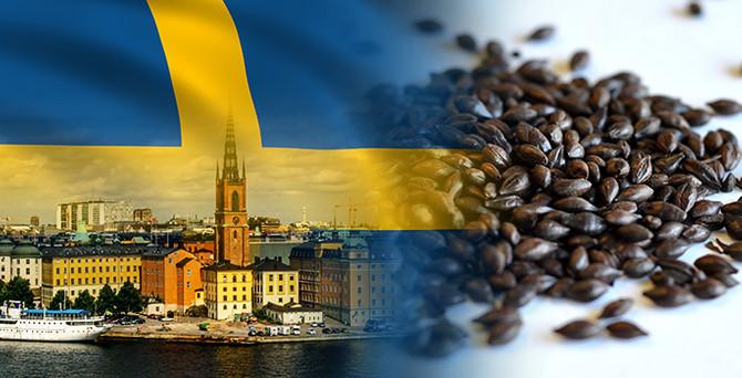 İsveçli müşteri kavrulmuş arpa satın alacak