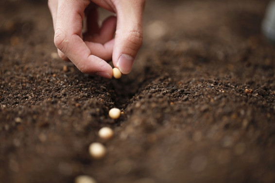 Hedef ilk 5 tohum üreticisi arasına girmek