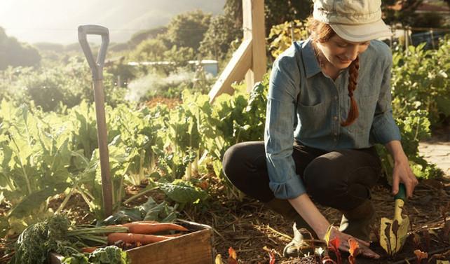 Tarımda 'genç çiftçi' dönemi