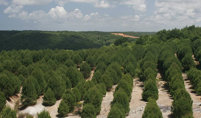 Ağaçlandırmaya 3.4 milyar TL