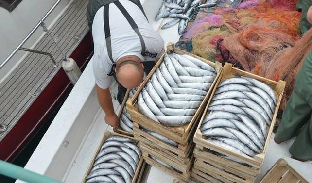 Balıkçılar palamuttan umduğunu bulamadı