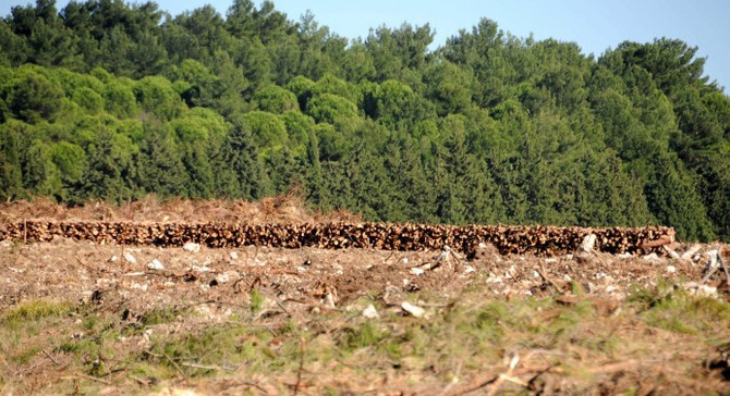 TANAP ve OGM 6 kenti ağaçlandırılıyor