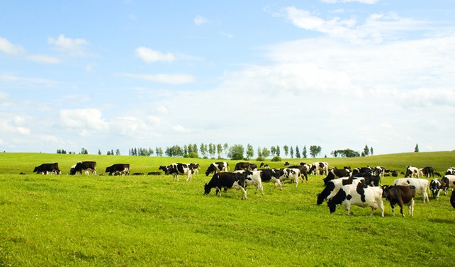 Hayvan üretimi yetersiz kaldı, ithalata 4.4 milyar dolar harcadık