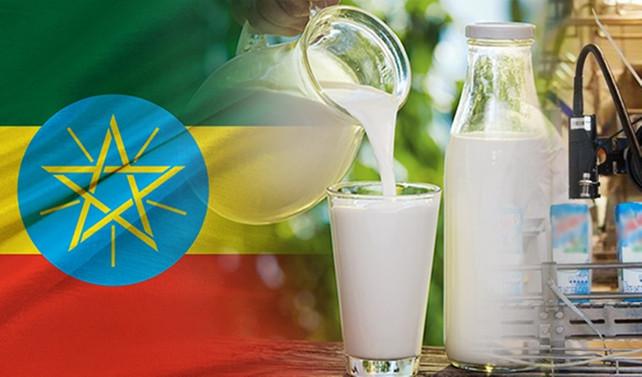 Etiyopya'da süt fabrikası kurulumu için teklif isteniyor