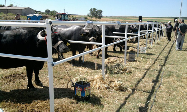 Hayvancılığa yüzde 100'e varan hibe desteği
