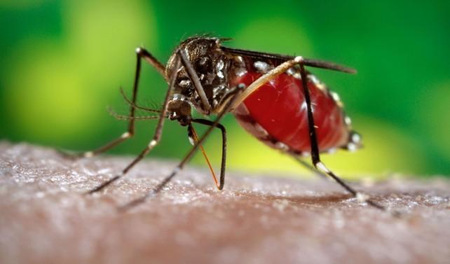 İspanya'da sinek çiftliği kuruldu