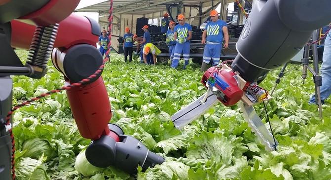 Brexit, robotları tarım işçisi yapacak