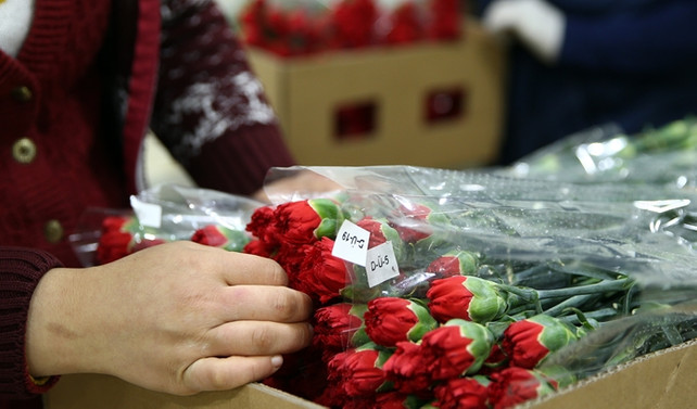 Çiçek ihracatında hedef 100 milyon dolar