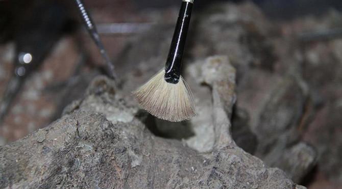 Hindistan'da 1.6 milyar yıllık bitki fosilleri keşfedildi