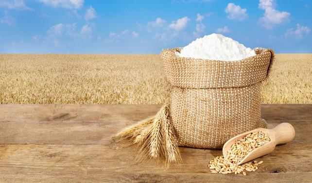 Rus buğdayına yasak, un ihracatını sekteye uğratır