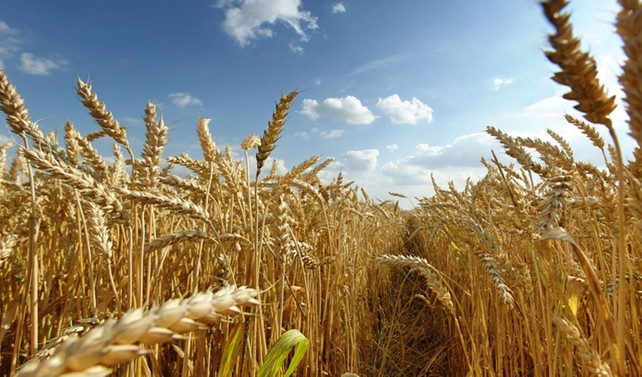 Türkiye ile Rusya buğday yasağı görüşülecek