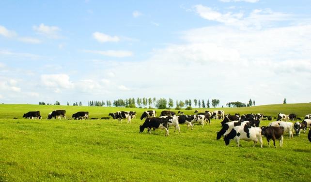 Genç çiftçi desteğinde şartlar zorlaştırıldı