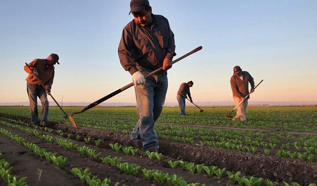 Mevsimlik işçinin ücreti arttı