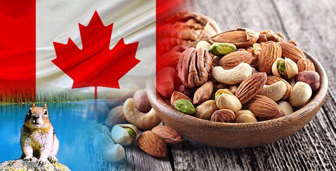 Kanadalı müşteri kuruyemiş ithal etmek istiyor