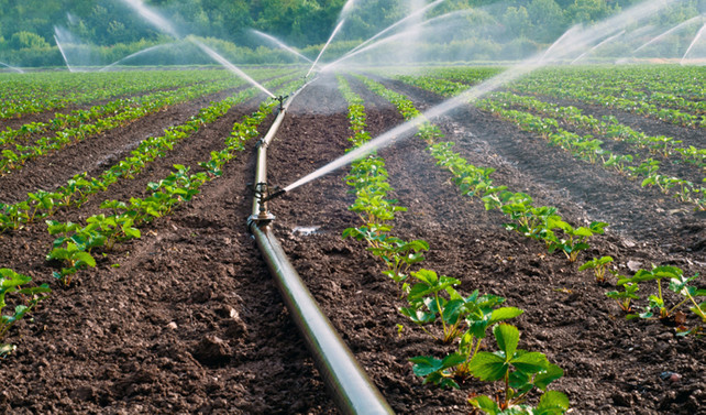 TÜİK, tarımsal üretimde artış bekliyor