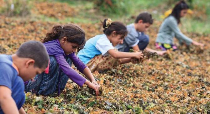 Çocuk işçiliğiyle mücadelede yeni dönem