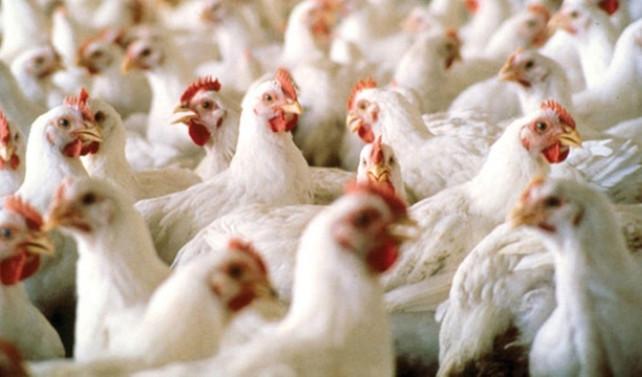 'Tüketici en çok beyaz eti sorguluyor'