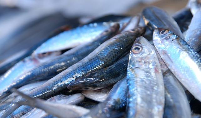 Su ürünleri üretimi yüzde 12,4 geriledi
